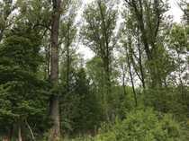 Waldgrundstück am Ortsrand von Melsungen