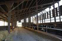 Bauernhof Milchviehbetrieb auch Pferdehaltung möglich