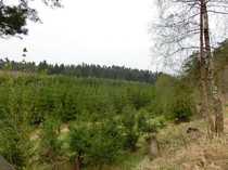 Wald- und Wiesengrundstücke - die Kapitalanlage