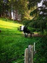 Landleben pur Schön gelegene ehemalige