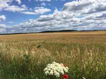 33 ha Landwirtschaftsfläche-Wald südlich von