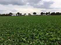 Bild Für den Anleger! Landwirtschaftliche Fläche in Geilenkirchen-Teveren