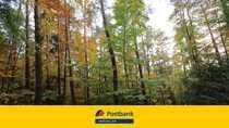 Bild 14.597 m² Wald bei Gottfrieding zu verkaufen!