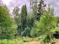 Waldgrundstück mit Wasserflächen bei Waldthurn