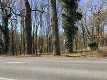 NEUER KAUFPREIS Waldgrundstück nahe Steinhuder