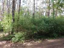 Waldbaden inklusive - Grundstück in Metel