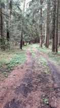 Bild Fast 1ha Wald mit gutem altem Bestand!