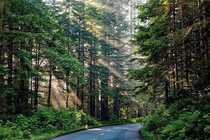 Bild attraktive Waldflächen mit gutem Bestand