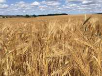 10 ha Ackerland bei Wismar