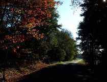 Forstbetriebe aufgepasst Waldflächen mit angrenzender