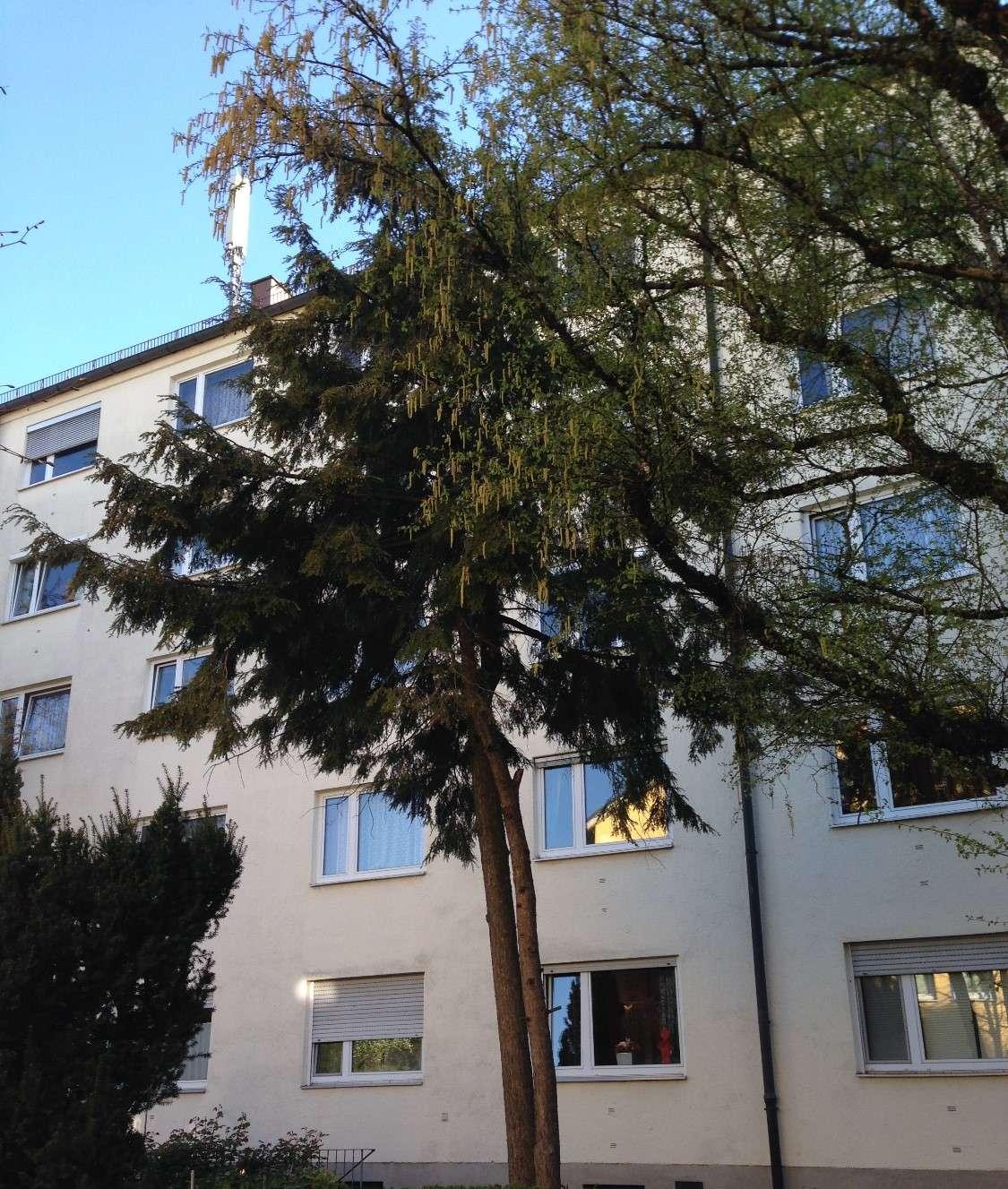 Schöne 2-Zimmer-Wohnung in Giesing