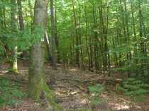 Bild GANESHA-IMMOBILIEN...Holz aus dem eigenen Wald !