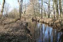 Waldfläche mit Bachlauf sucht neue