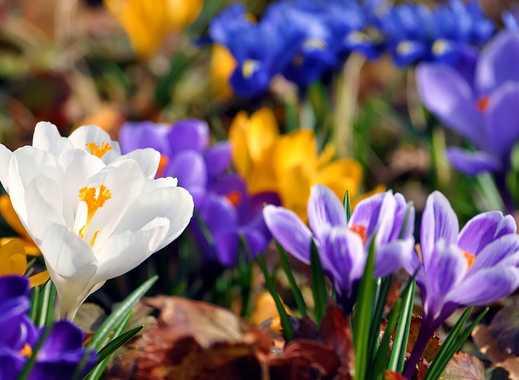 Gartenliebhaber aufgepasst ! 3 Zimmer + Tageslichtbad + Garten in Bad Vilbel