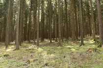 Bild 1 Hektar Nadelwald bei Redlin!
