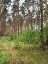 Waldflächen im Spreewald