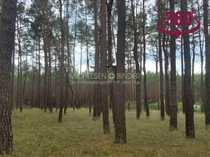 Idyllisches 2000m² großes Waldgrundstück mit