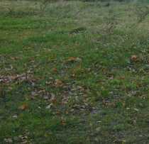Exklusiv Bauland in Riesa-Weida