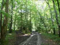 Waldfläche Nähe Aschau am Inn