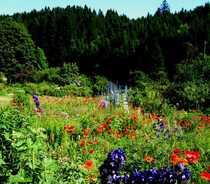 Bild 20 Hektar WALD * Gepflegter Altbestand mit Nadelbäumen und Mischwald