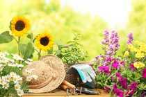 Bild Für Gartenliebhaber: Gartenwohnung mit Hobbyraum Whf-/Nfl.: 94,39m²