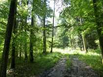 Bild Waldfläche in der Nähe von Aschau am Inn, reduzierter Kaufpreis