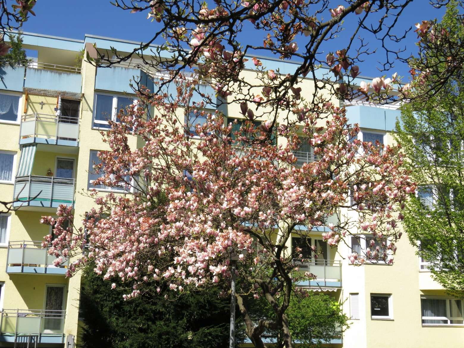 Helle, familienfreundliche 3-Zimmer-Wohnung mit zwei Loggien zu vermieten in Universitätsviertel (Augsburg)