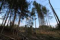 Bild Kleine Waldfläche bei Eiselfing