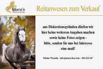 Bild Reitanlage, Gestüt nahe Bremen, Verden zu verkaufen