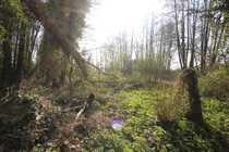seltenes Grundstück mit Baumbestand Biotop