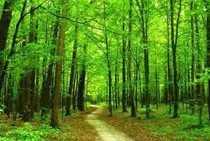RARITÄT Forsthaus im Walde idyllisch