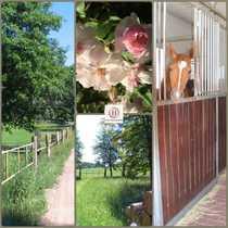 Wohnen mit Pferden Landhaus Wiese