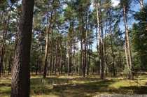 Bild Großes Forst- und Jagdgut in der Schorfheide