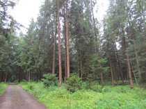 Bild Für Kachelofenbesitzer oder Waldbauern!