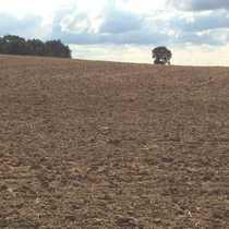 ca 300 ha Land-und Forstfläche