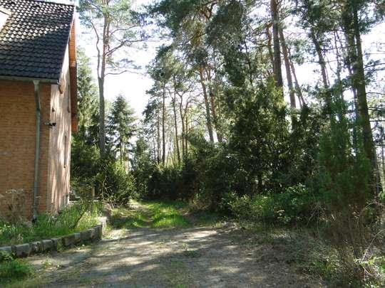 Massives Haus auf großem, bereits geteiltem Waldgrundstück, nahe Krüpelsee in Zernsdorf - Bild 3