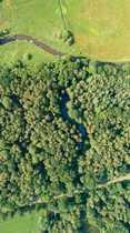 Provisionsfrei Große Waldfläche mit einer