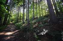 Liebhaberstück - schönes Waldgrundstück in Buchholz -