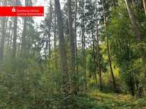 Waldfläche zur Erweiterung Ihrer Kapitalanlagen