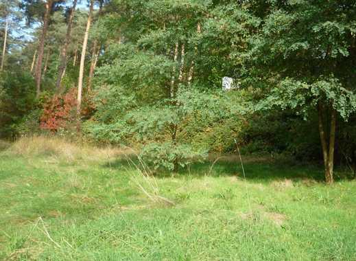 Naturnahes Baugrundstück in exponierter Waldrandlage