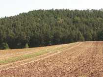 Nutzwald mit über 70 Jahre
