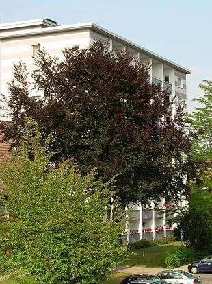 hwg comfort - Seniorengerechte 2-Zimmer Wohnung mit Dusche, Aufzug und Balkon!