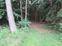 Bild 16.550 qm WALD - Damit haben Sie immer genug Holz vor der Hütte!!!