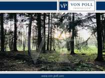 Schönes Waldgebiet für Naturliebhaber