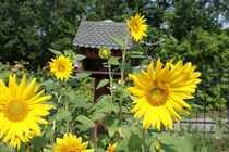 Einfamilienhaus zentral gelegen in Trebbin