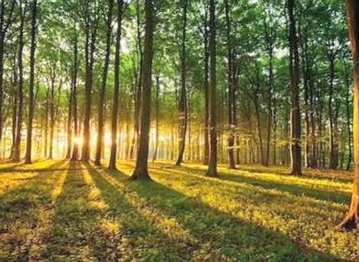 Waldgrundstück grundstück kaufen in grünheide immobilienscout24