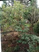 Bild WG-Zimmer teilmobiliert  in großem renovierten Haus mit Garten in Städtenähe gute Busanbindung