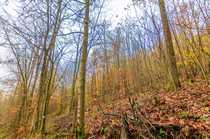 Holz in rauen Mengen - Waldgrundstück