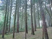 2 Hektar Wald zwischen Volkenschwand