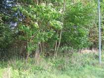 Bild Schnäppchen aus Insolvenz - Landwirtschaftsflächen in Zirsevitz und Dumsevitz